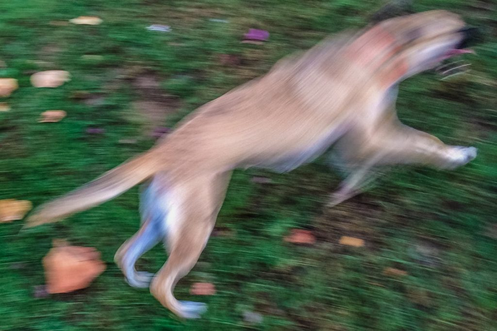Running-Dog-color-Panama-2.14.14-1-1024x683.jpg
