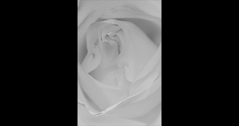 WHITE-ROSE-FB-TEST.jpg